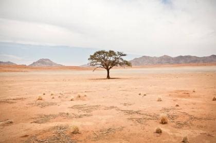 desert tree 1.jpg