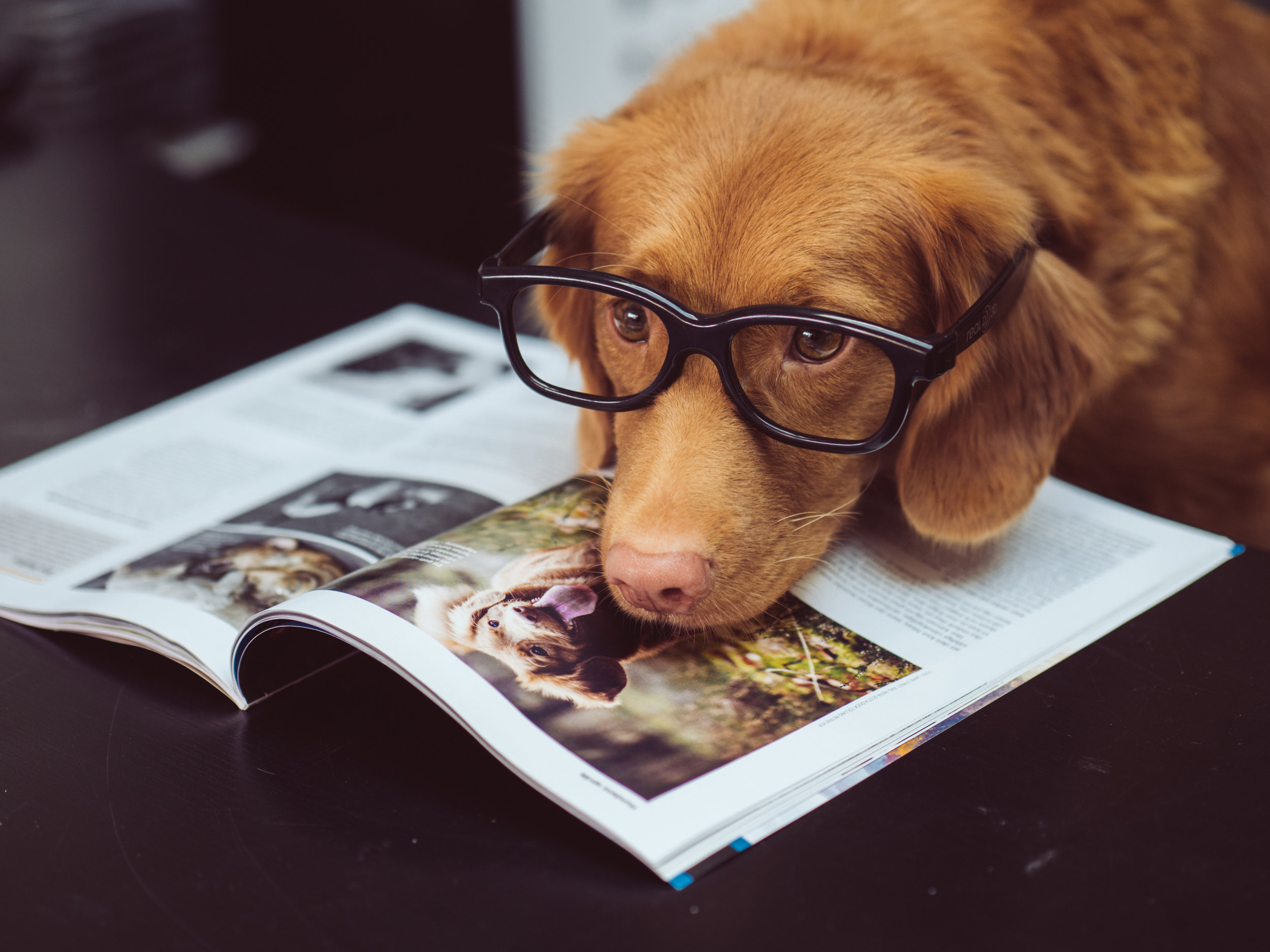 Notes - Writings 📍Pet Health 📍Training Resources📍Other Info📍
