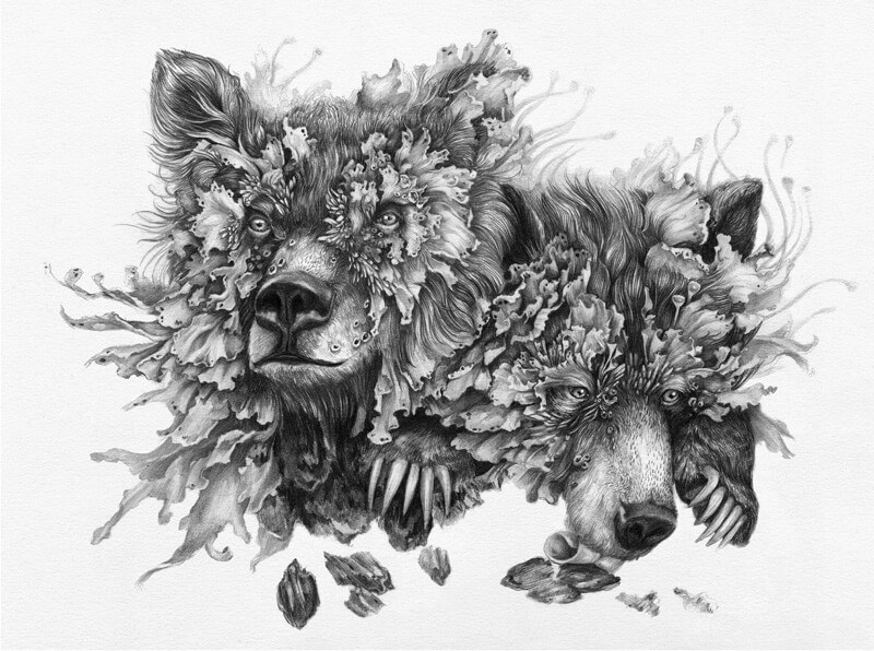 lichen-bears-300.jpg
