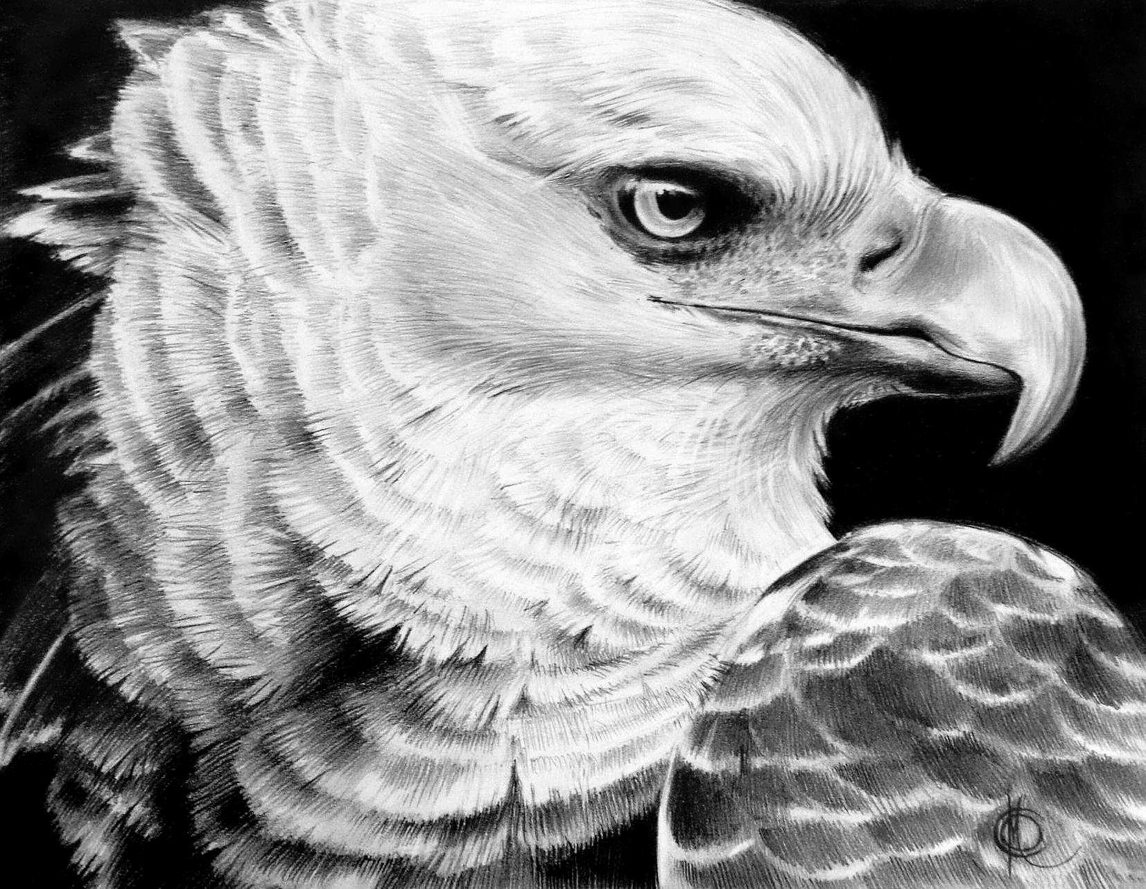 """""""Eagle"""""""