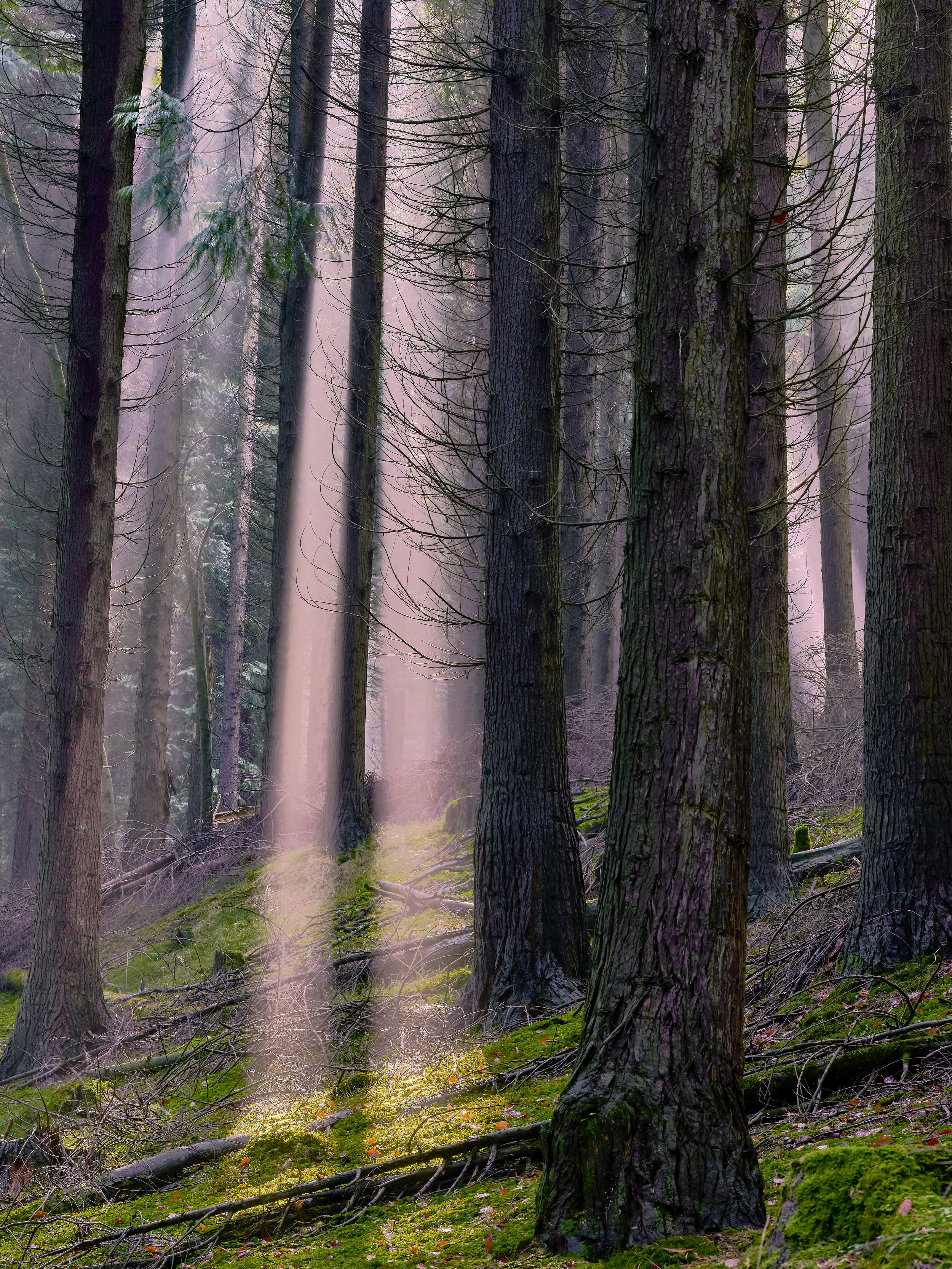 Autumn's last days from northern Spain's forests whilst using trees as framing devices.