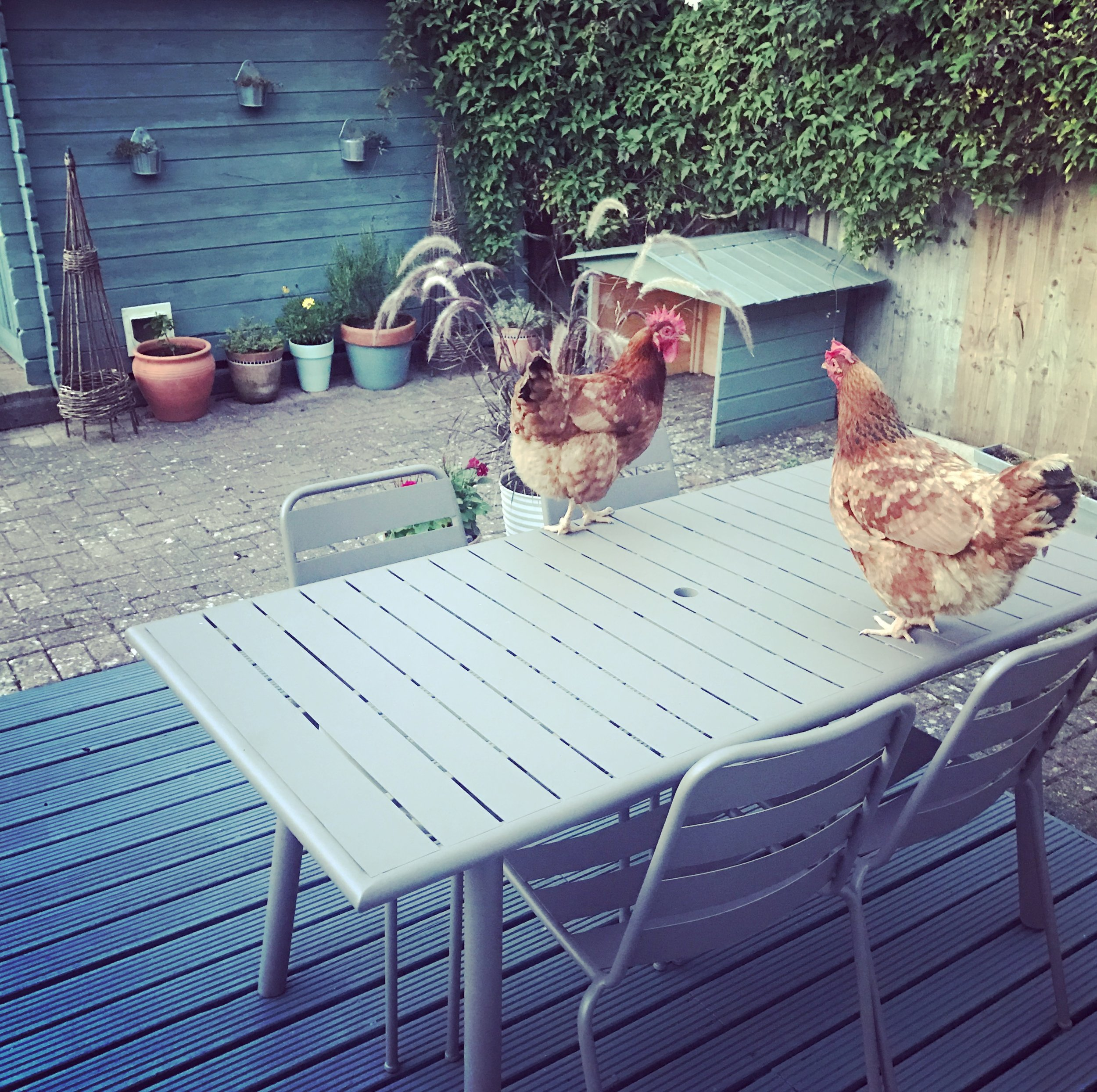 Margo (left) up to no good on the table with her late friend Barbara last summer.