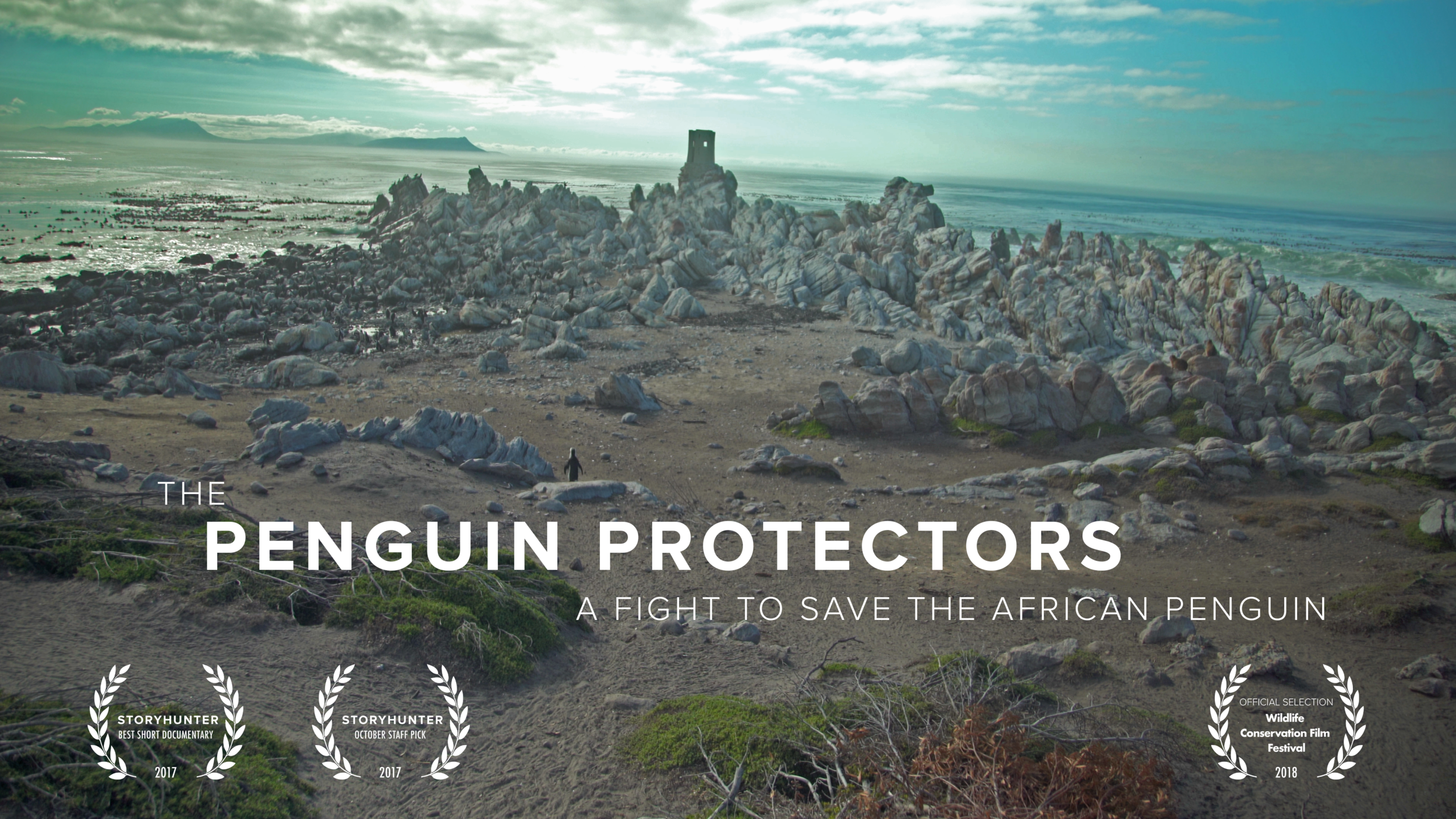 The Penguin Protectors    Hakai Magazine    View Project