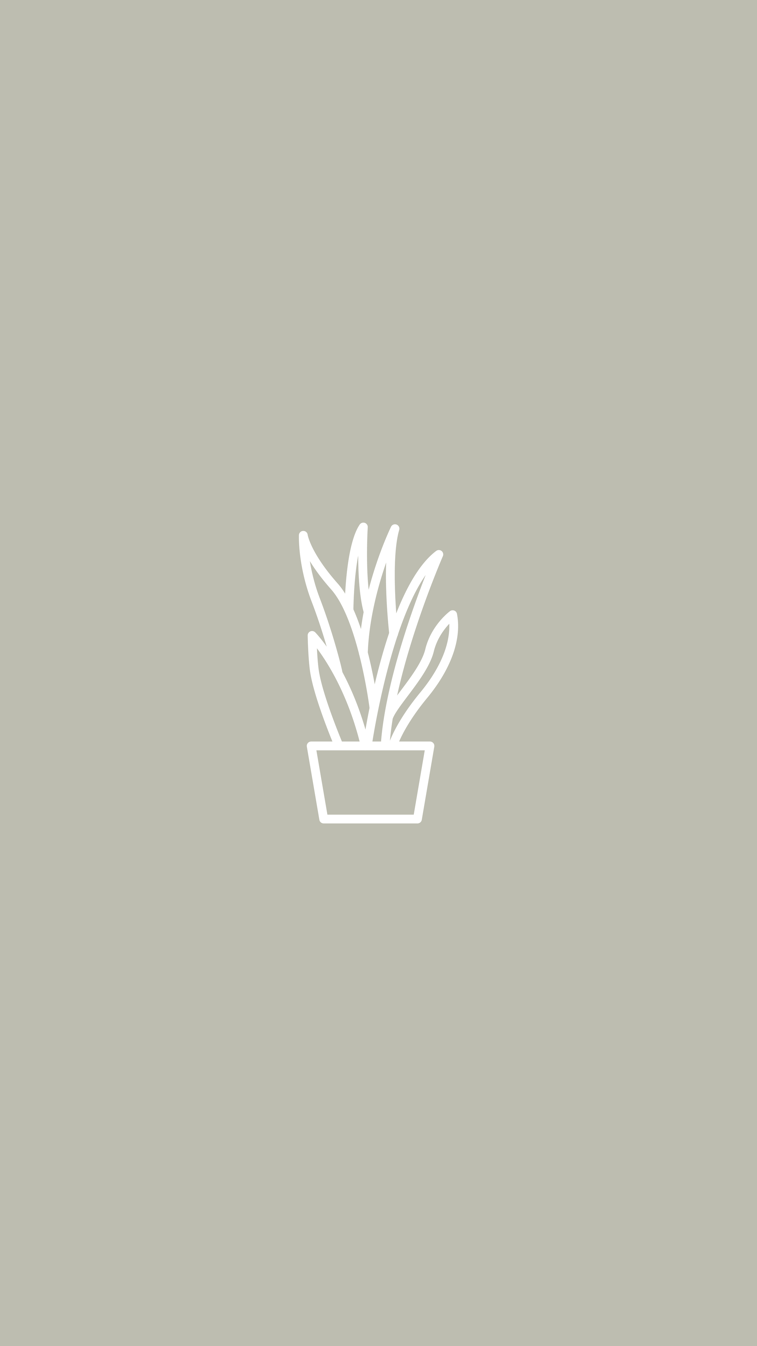 Snake Plant, House Plant, Plants