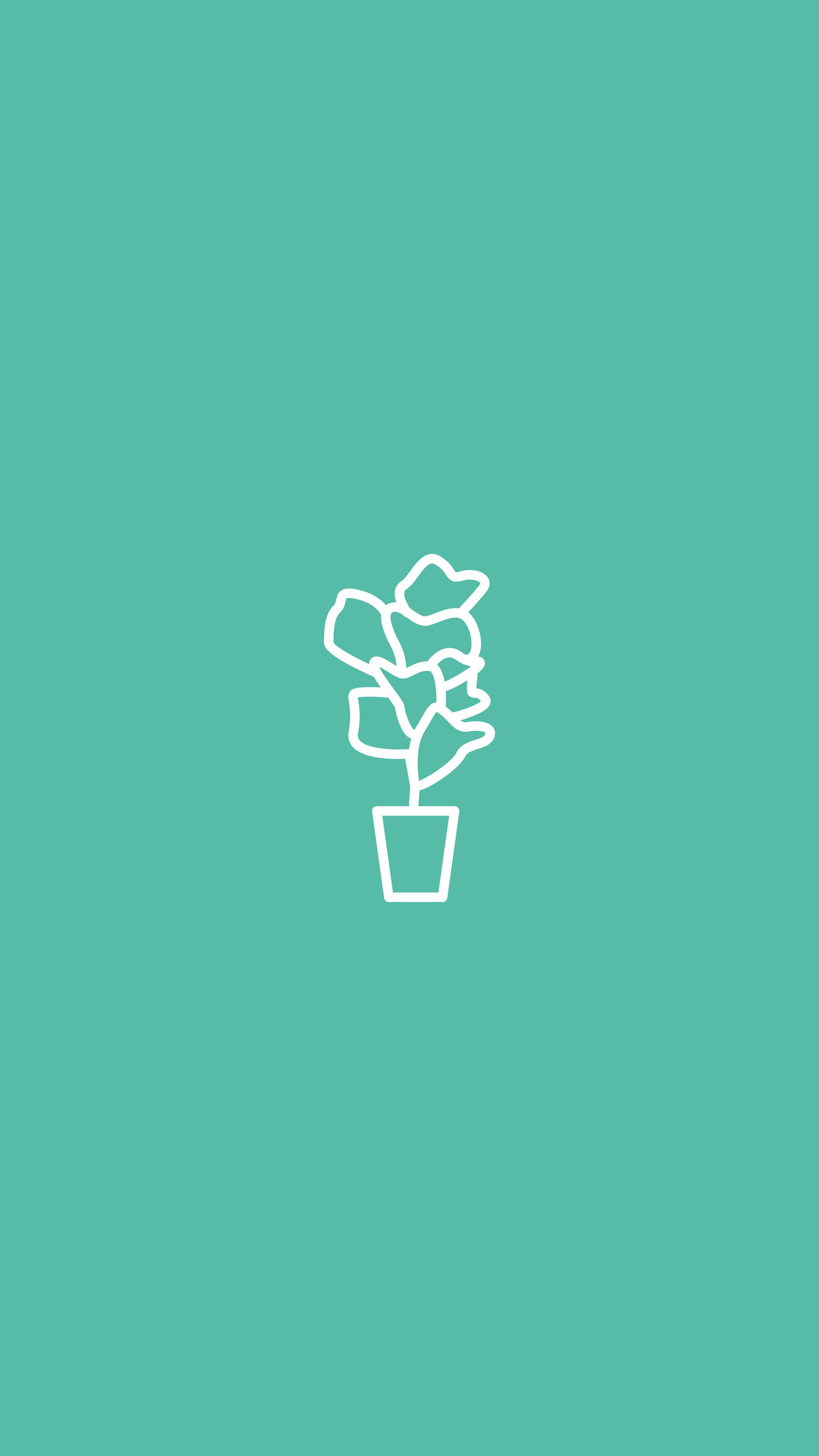Fiddle Leaf Fig, Plants, House Plant