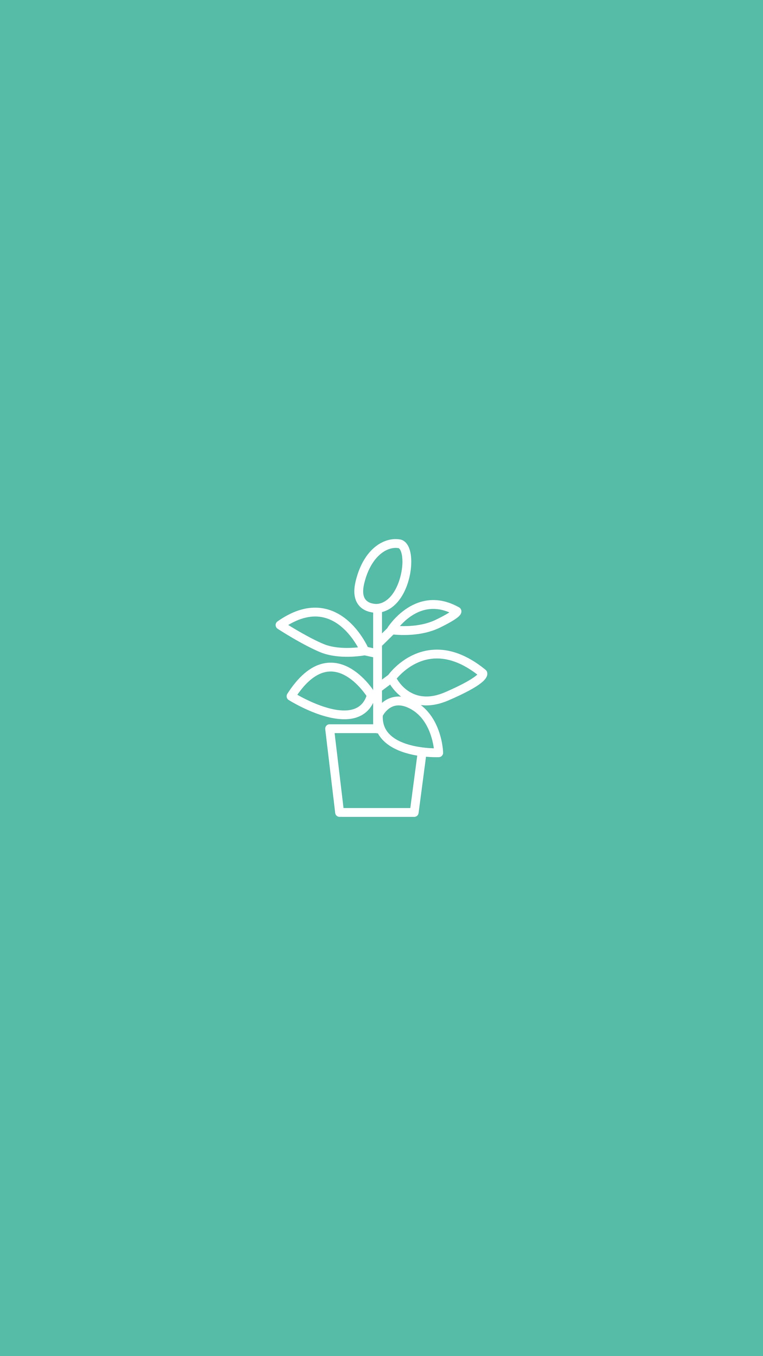 Rubber Plant, House Plant, Plant
