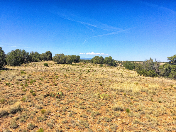 Mesa-Field.png