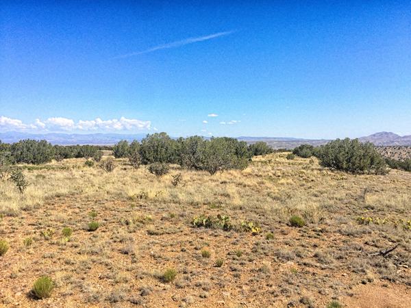 Mesa-Field4.png
