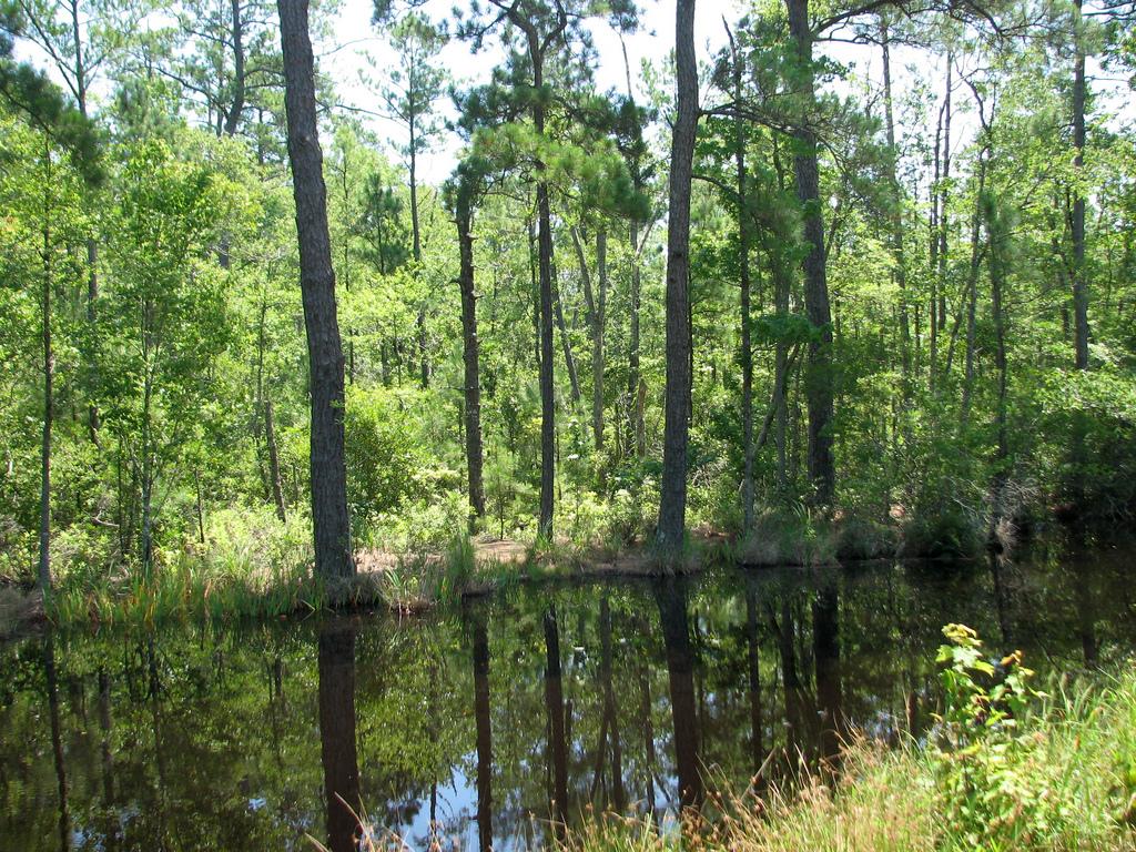 Alligator Creek - Flikr.jpg
