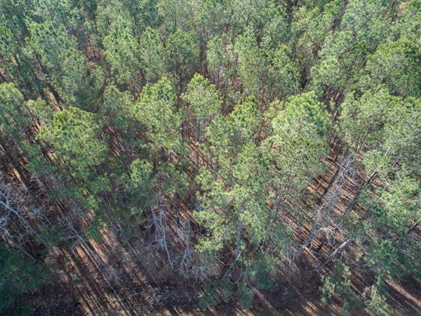 9504-Woods-closeup.png