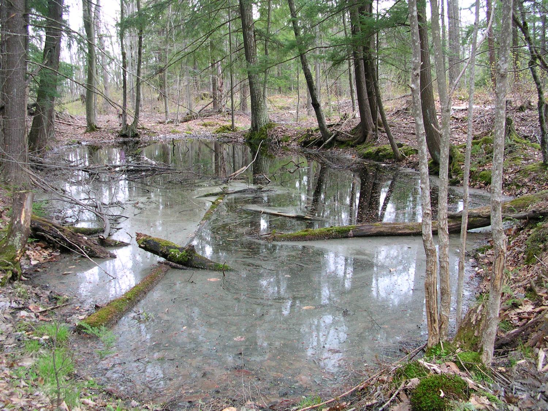 Vernal pools provide spring breeding habitat for several  amphibian species