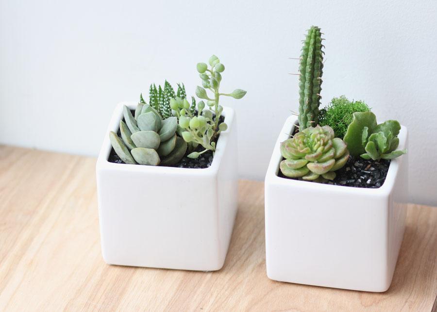 succulentplanterswhitecubeWEB.jpg