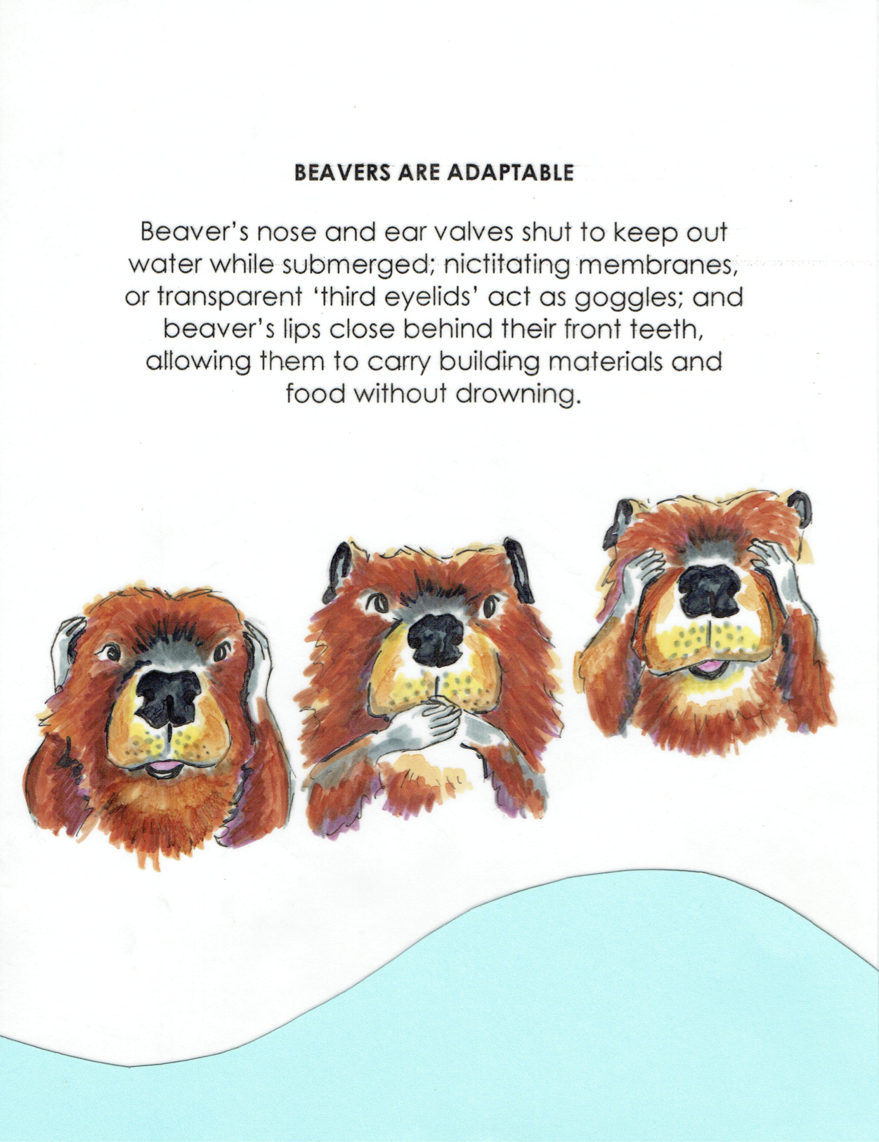 Beavers Are Adaptable.jpg