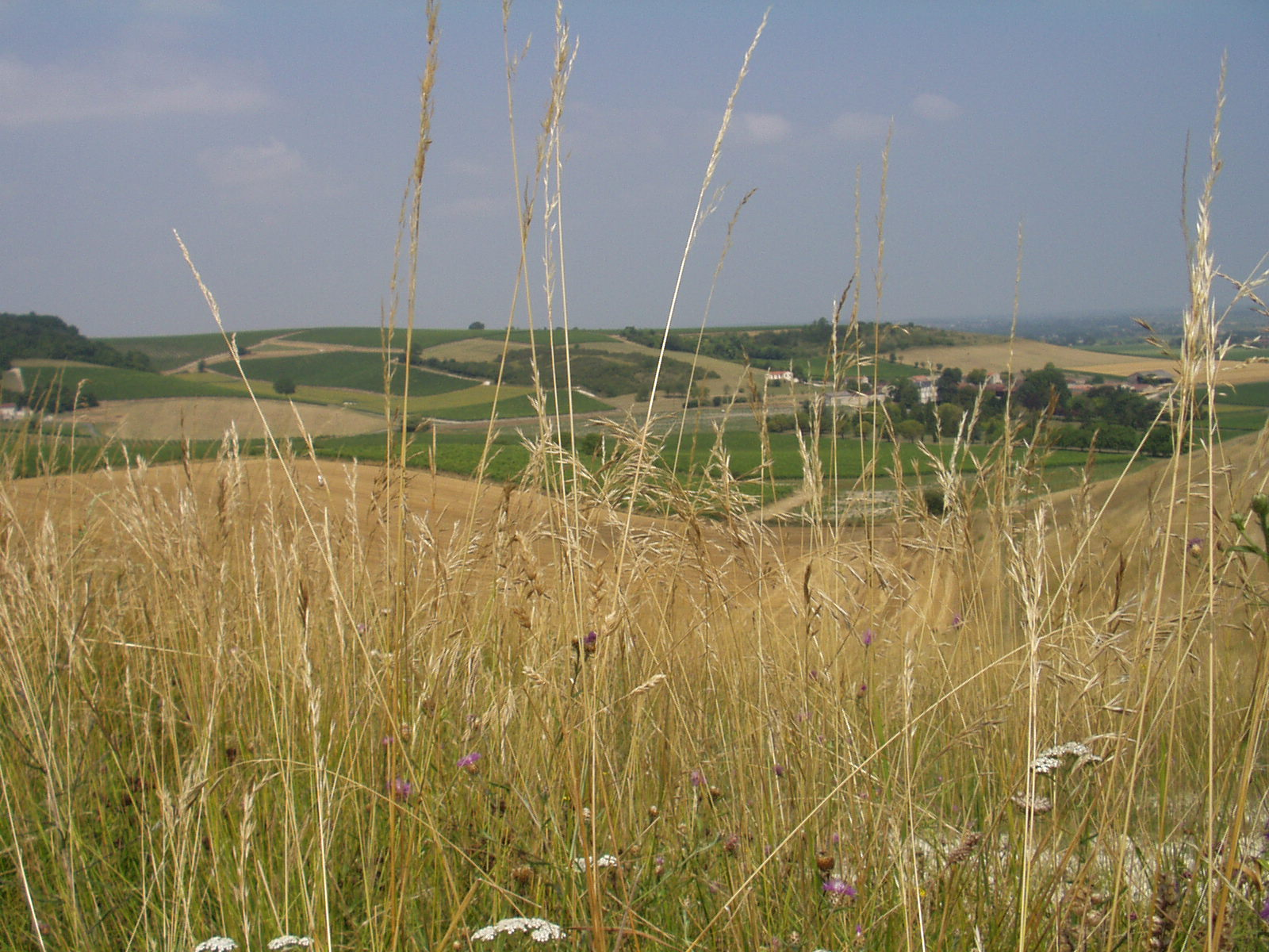 landscape 3.JPG