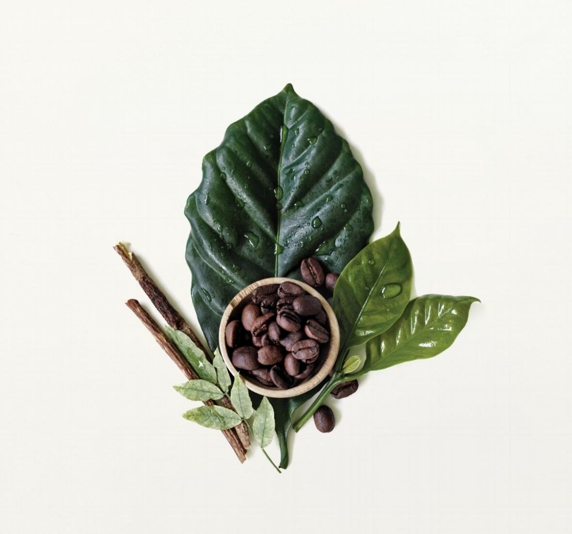 Botanical_Kinetics_ingredient_image.jpg