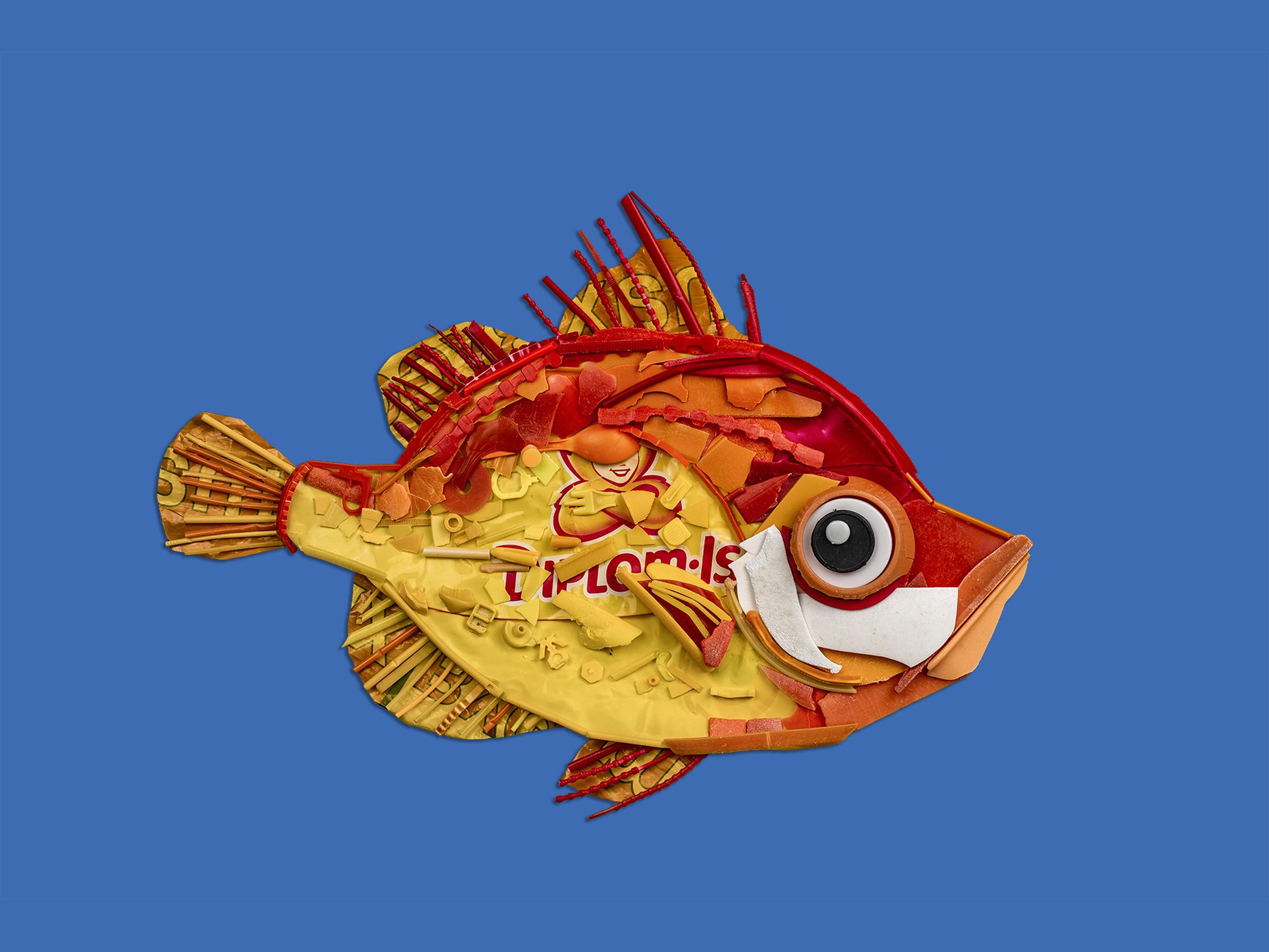 Villsvinfisk Vassenden skule 6b.png