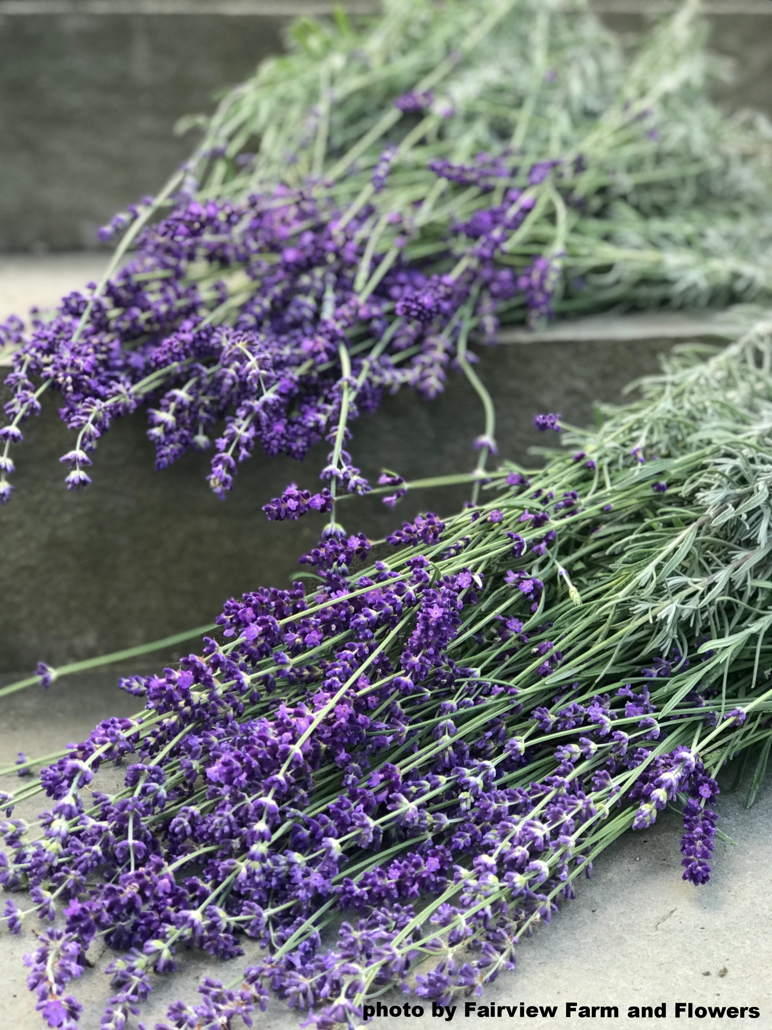 Fairview Farm and Flowers lavender.jpg