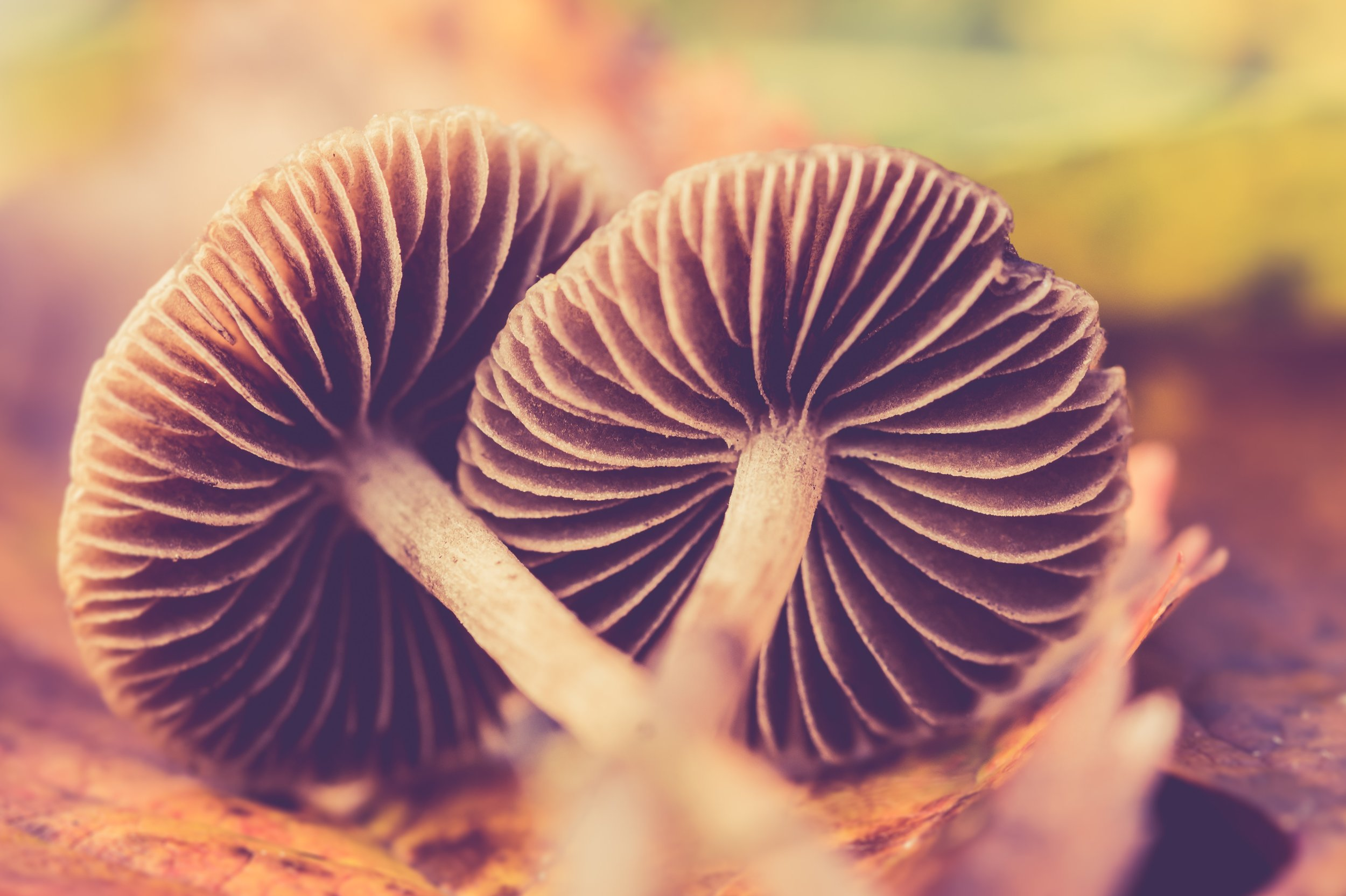 Why Mushrooms are Special -