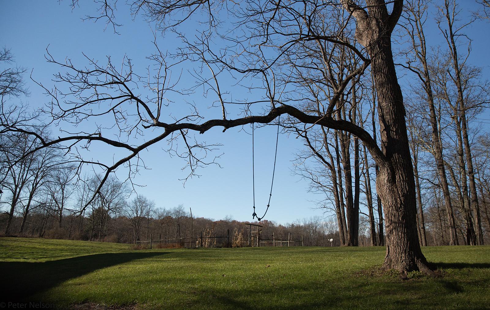 A black walnut tree and garden view
