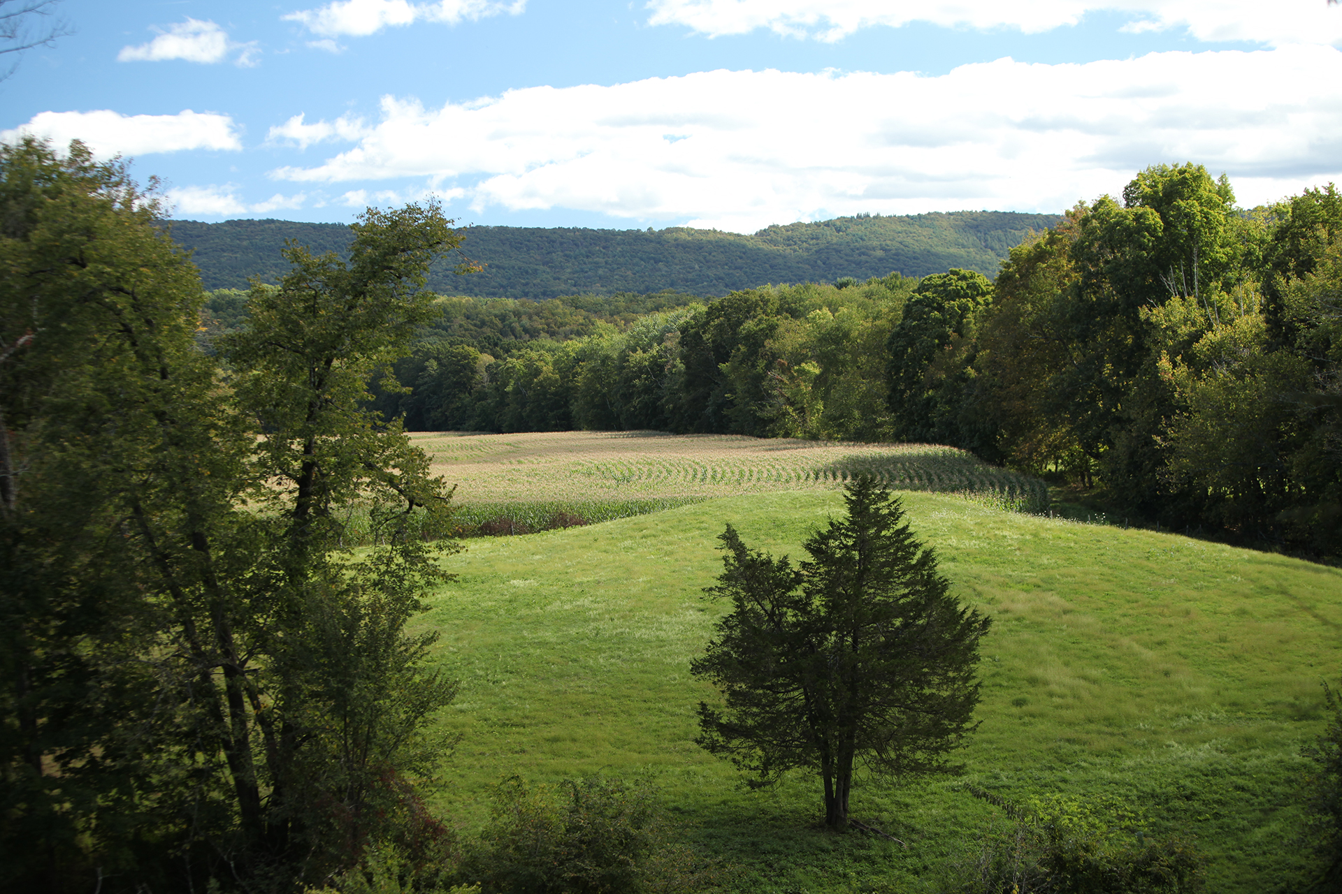 View of the Shawangunk Ridge beyond hay and corn fields