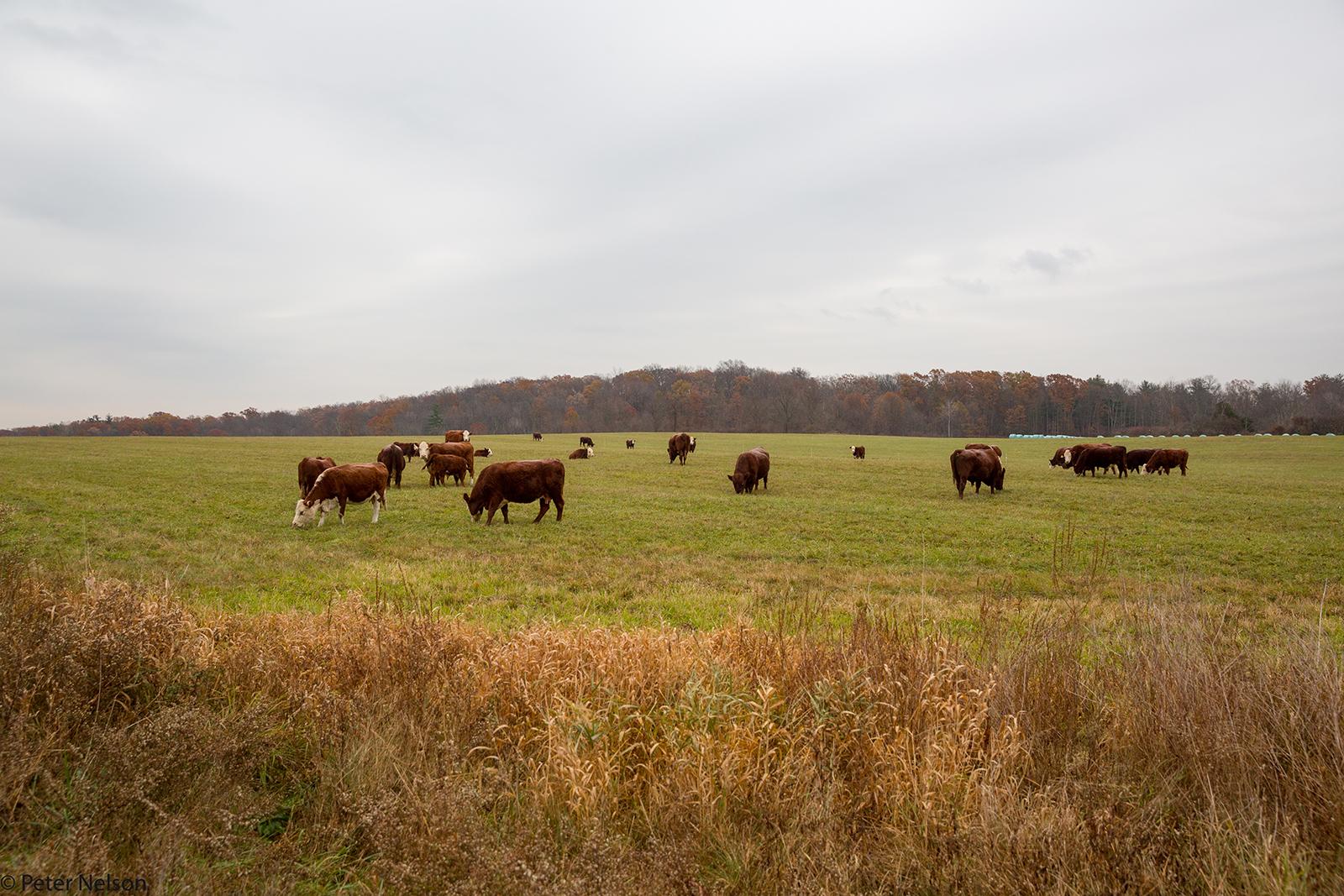 A Rest Plaus Pasture