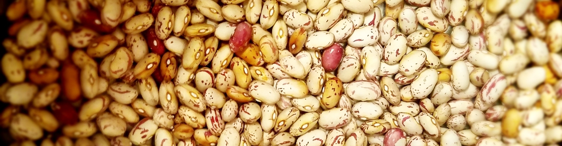 Cranberry beans soaking in water.