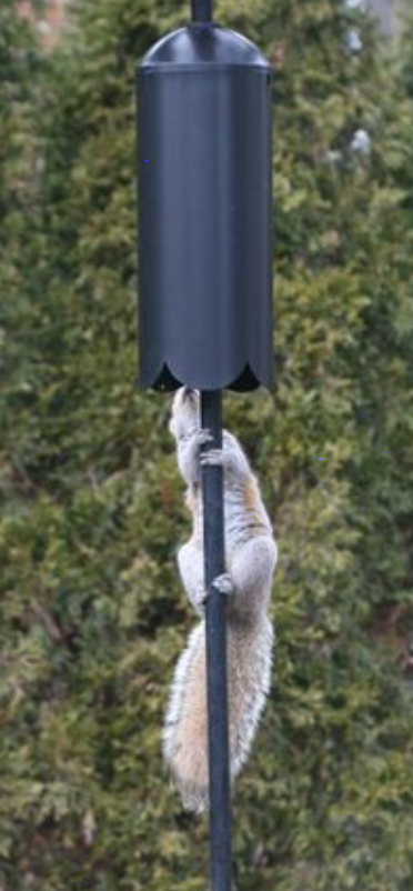 dome squirrel baffle