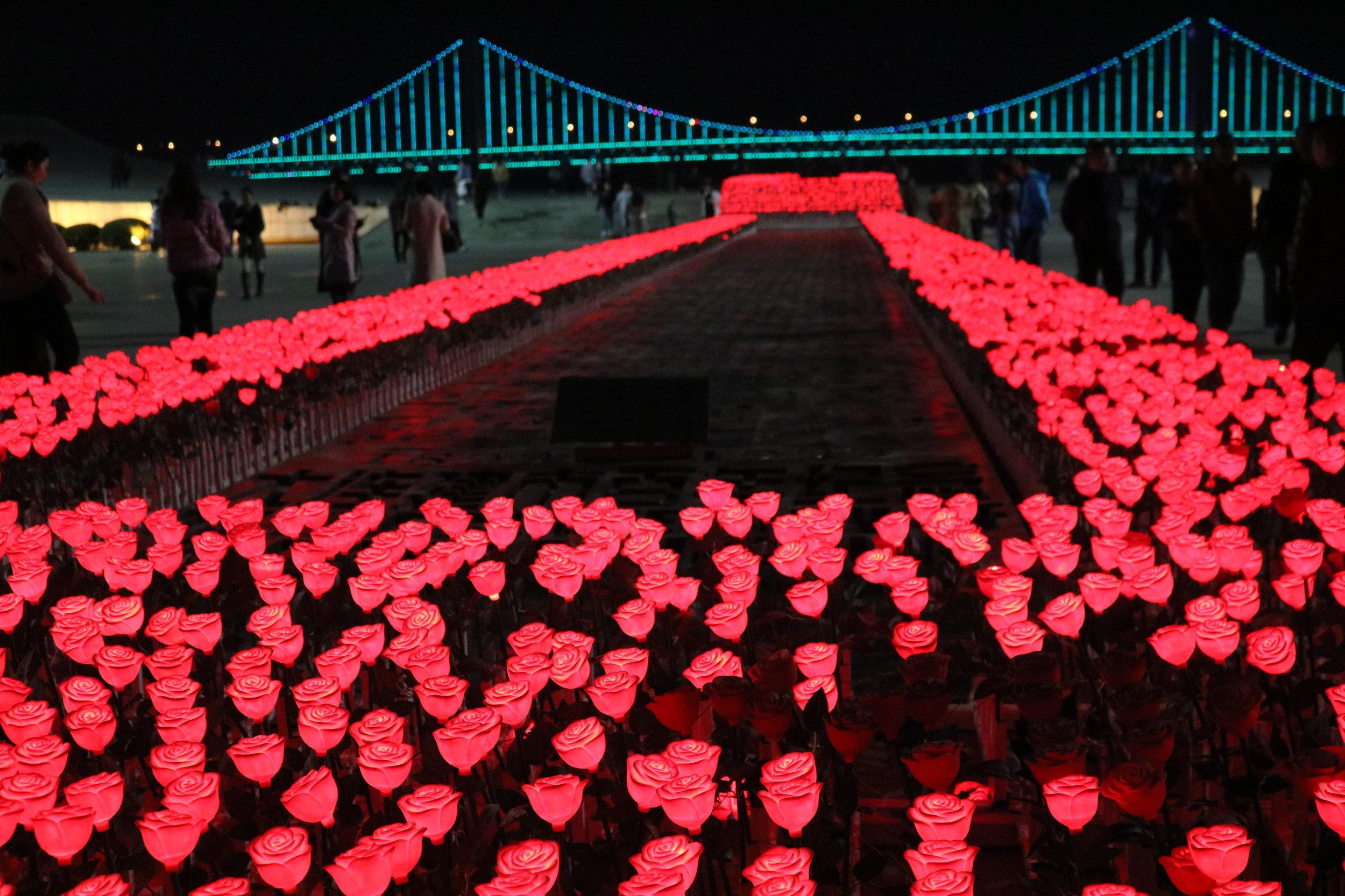 Red Roses at Xinghai Square - Dalian, China