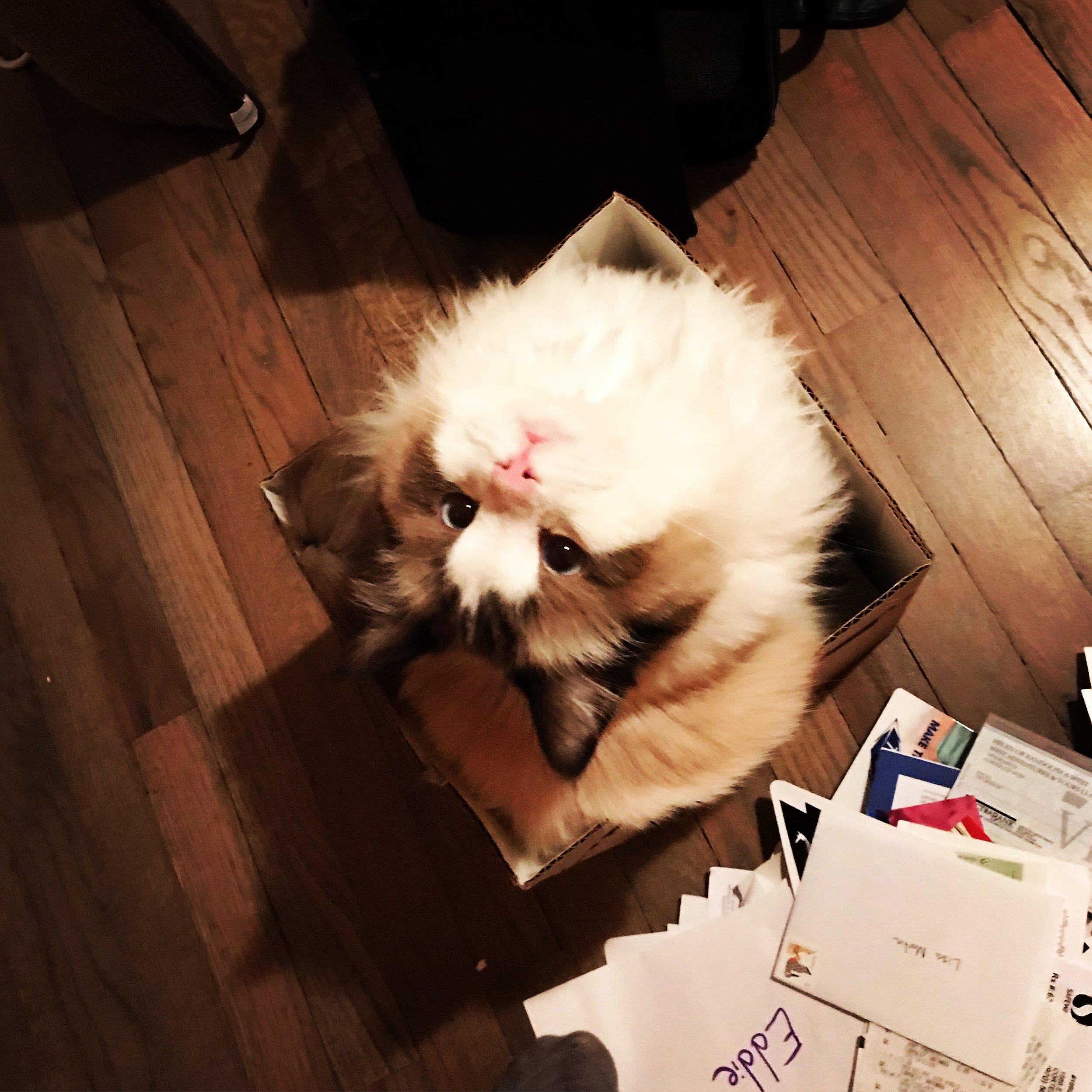 Mr. PC - Cat