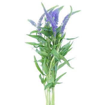 veronica flower.jpg