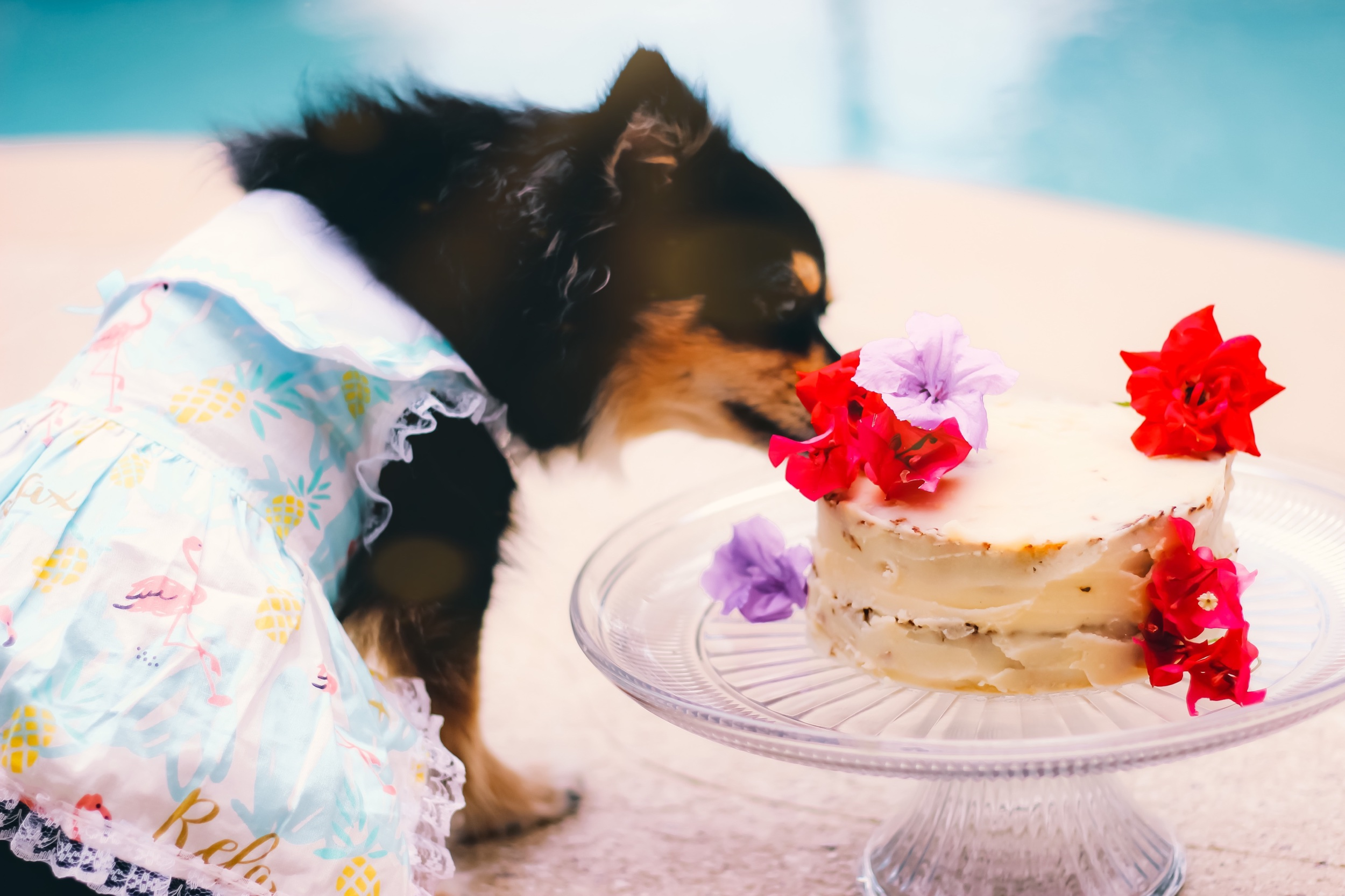 Happy 3rd Birthday, Pepper Mint! - Chicken Meatloaf Cake Pawty