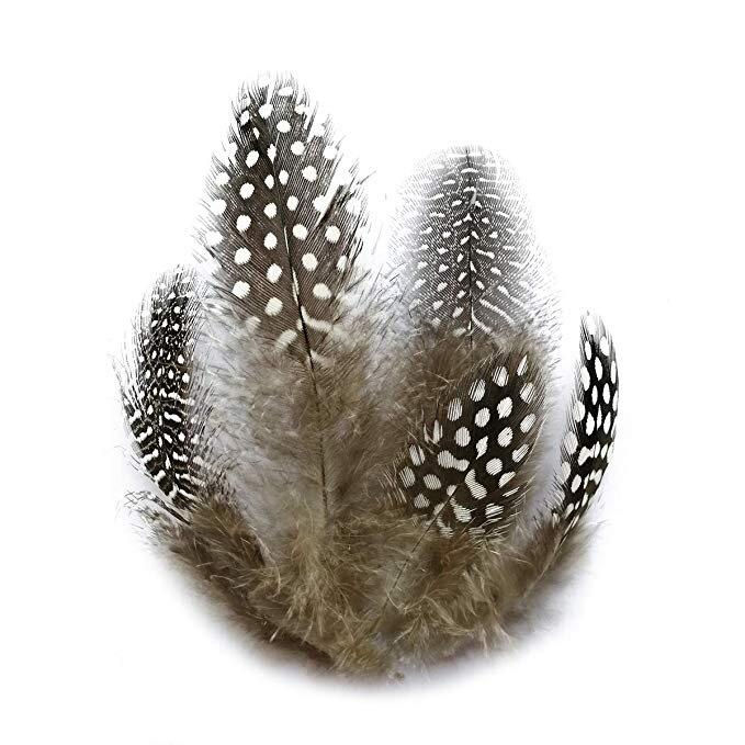 pheasant feathers.jpg