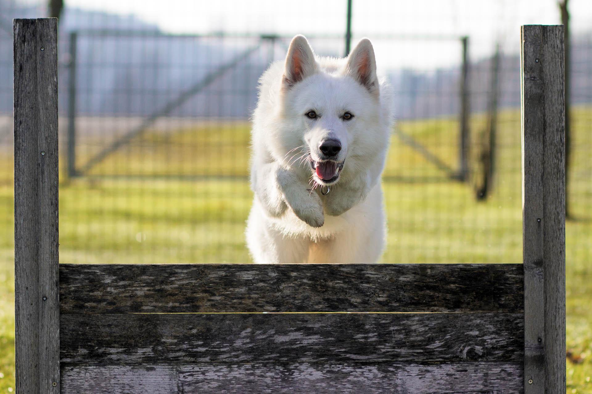 Hundesport.jpg