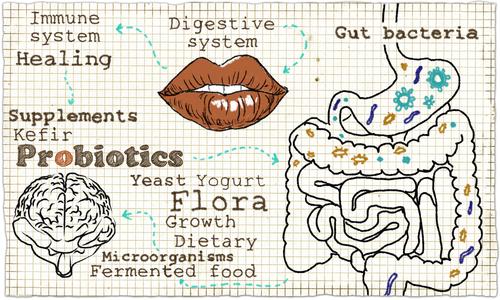 Probiotika-entero.jpg