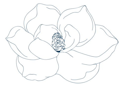 Susanna-Kemper-graphics---Magnolia-flower---line-drawing-navy.png