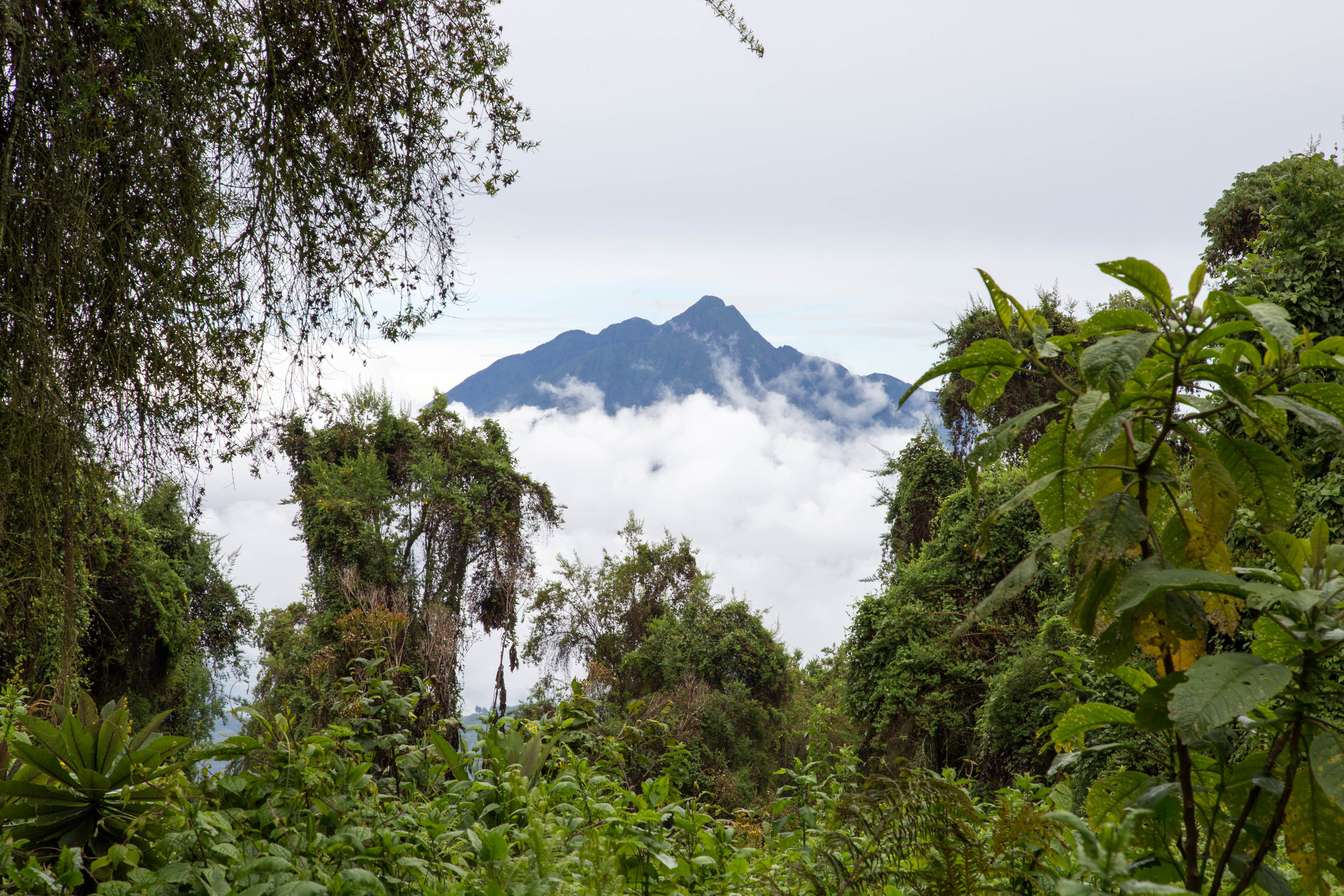 Mount Bisoke - A very rapid incline through a dense jungle to the top of a crater volcano.