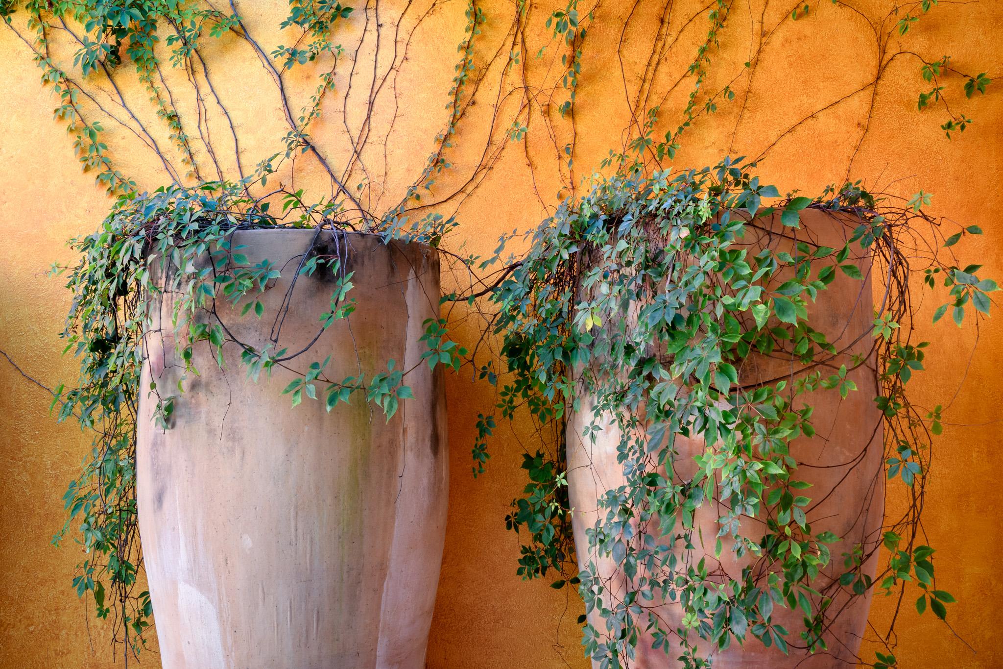30-Garden.jpg