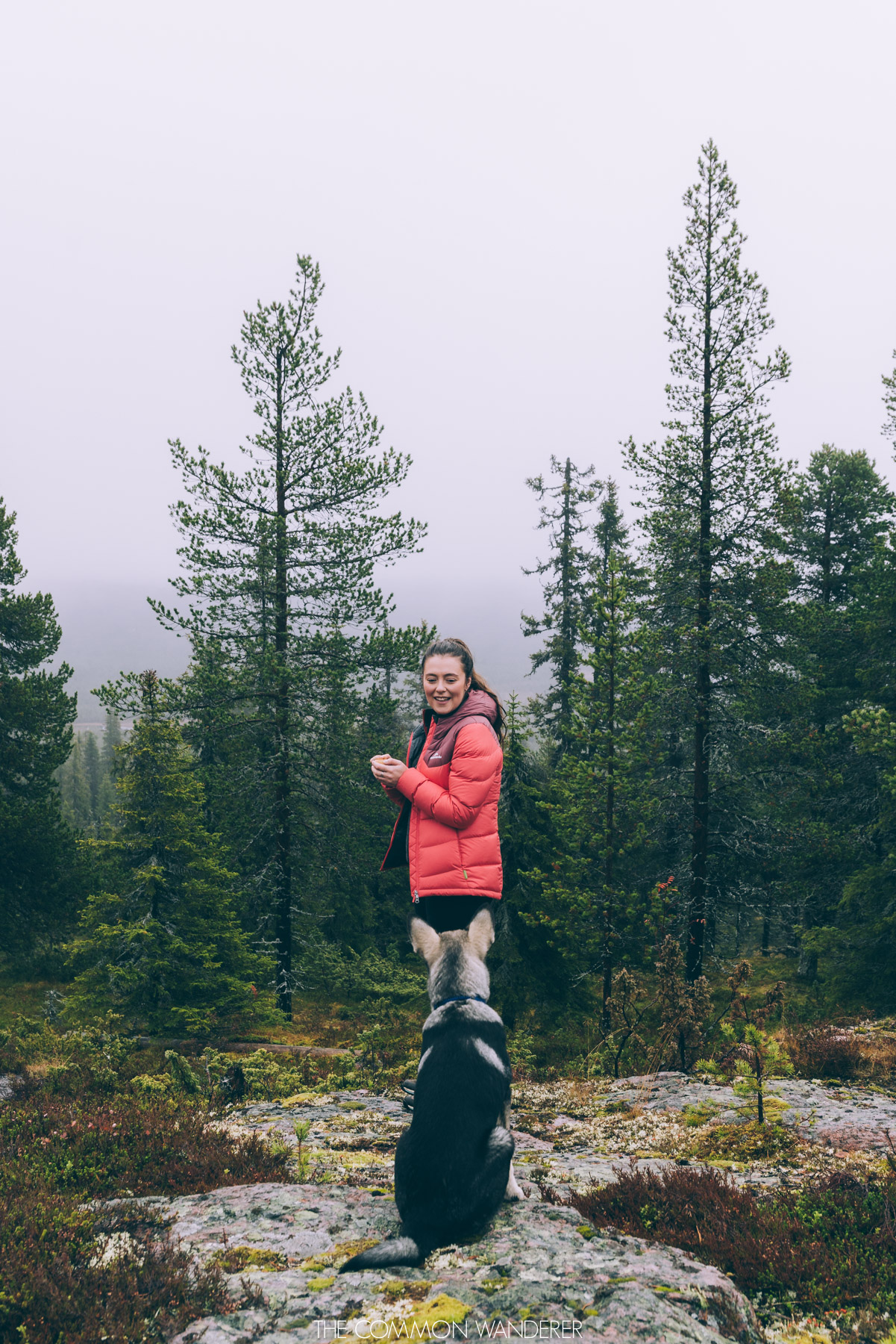The Common Wanderer: Year in review - Swedish Lapland hiking with a dog