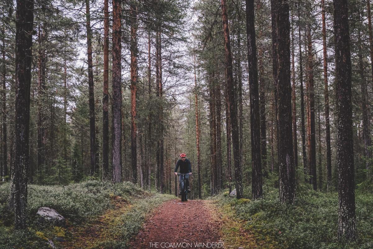 The Common Wanderer_-4.jpg