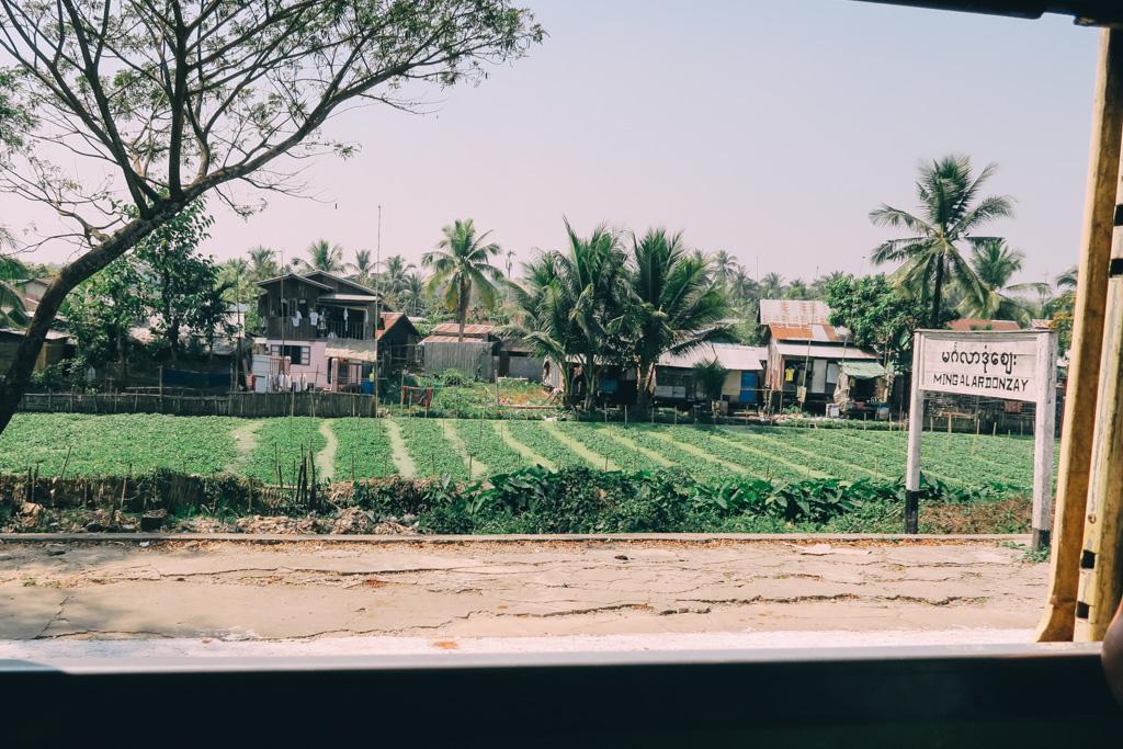 Exploring Yangon by rail and viewing watercress fields that line the station platform-Yangon circle line train