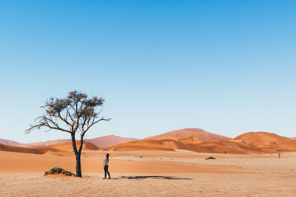 The trees of Sossusvlei Namibia