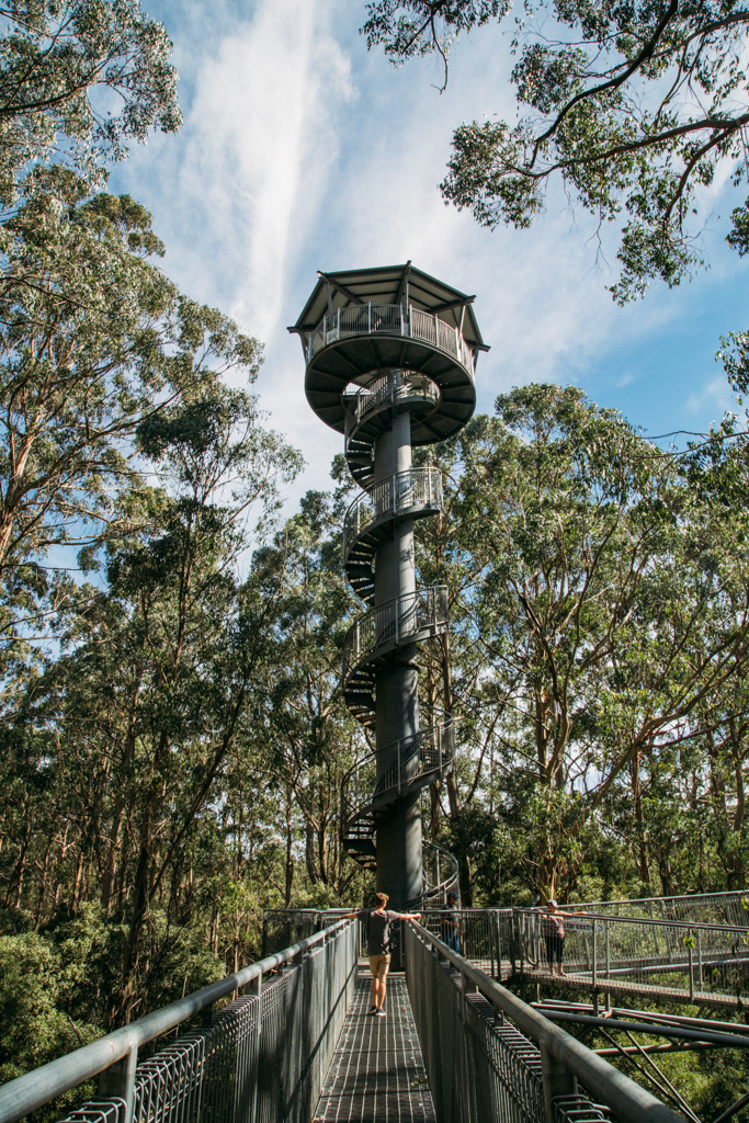 Exploring the Otway Fly Treetops Walk on our road trip through Victoria
