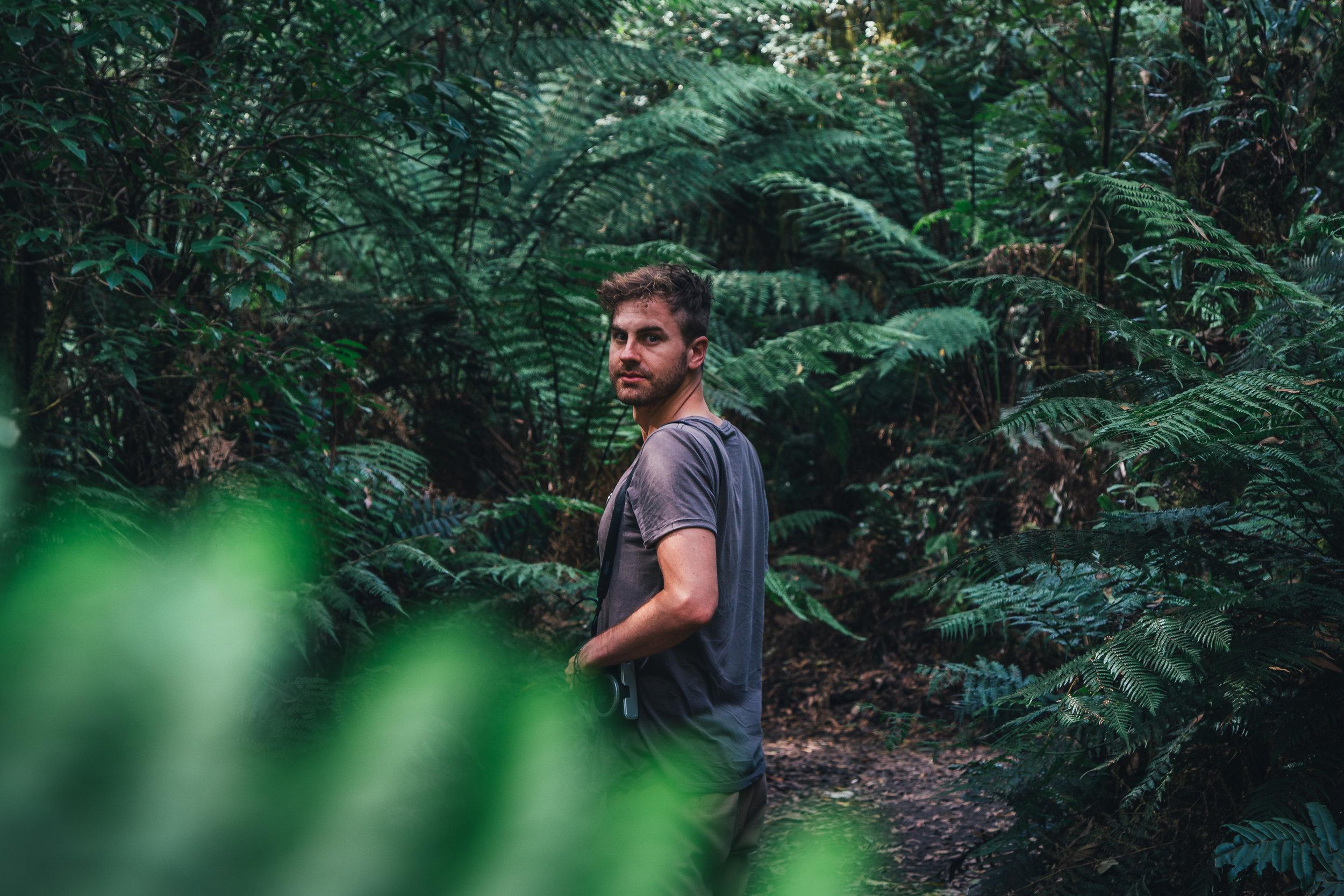 A man explores the Otway Fly Treetop Adventures, Victoria, Australia