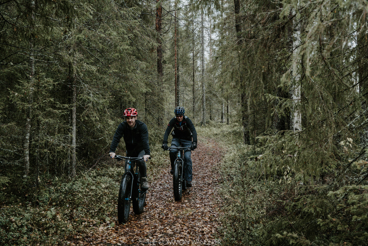 Things to do in Swedish Lapland - Fatbiking through the forest