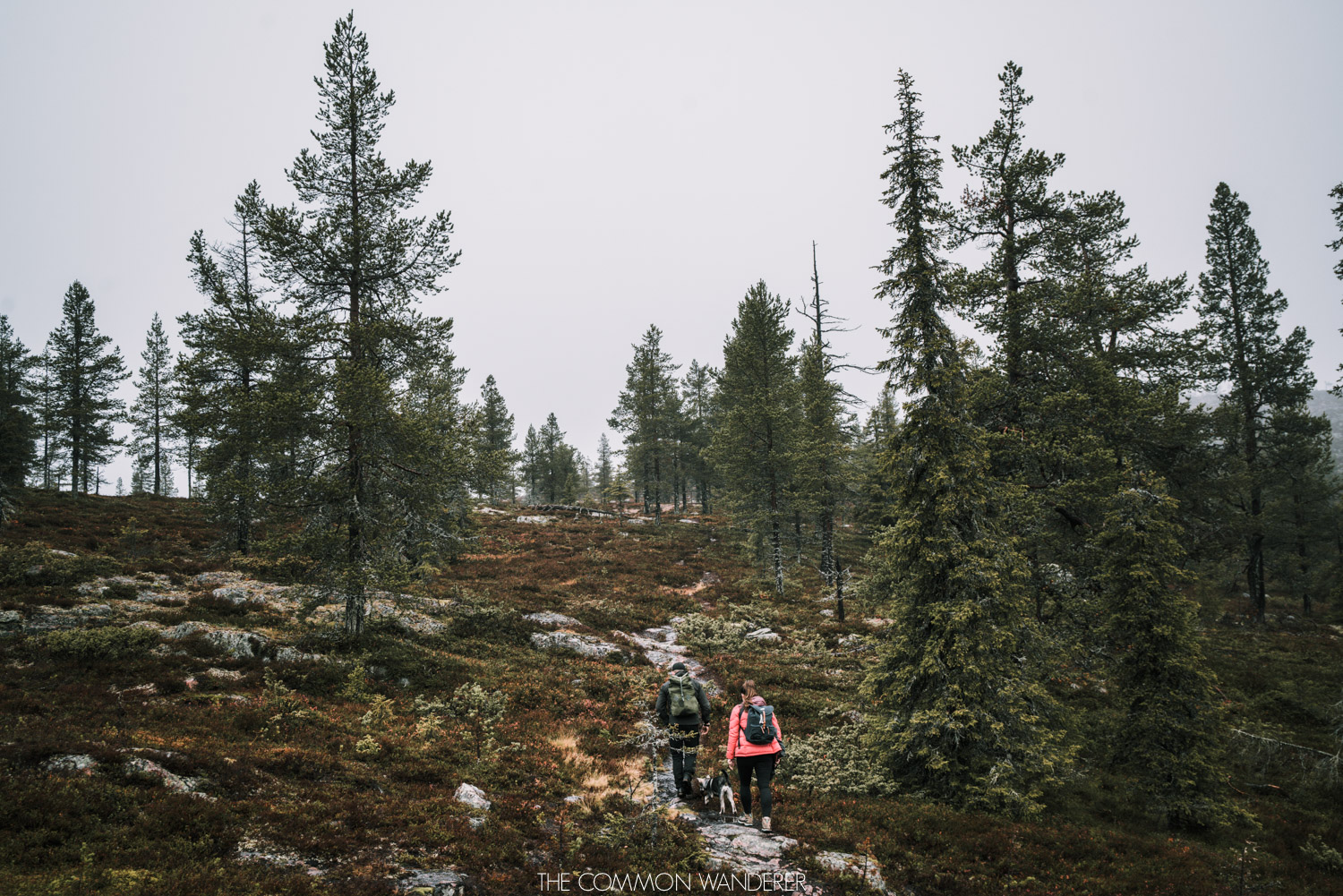 Lapland Pictures: hiking in the forest near Arjeplog, Swedish Lapland, Sweden