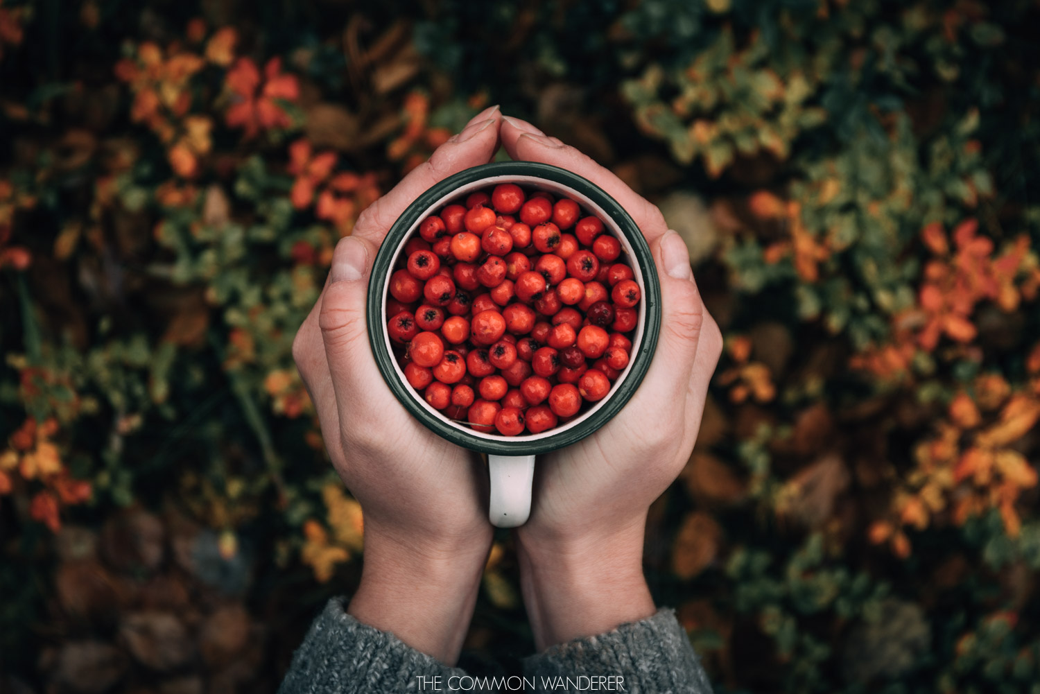 cup of berries in Swedish Lapland