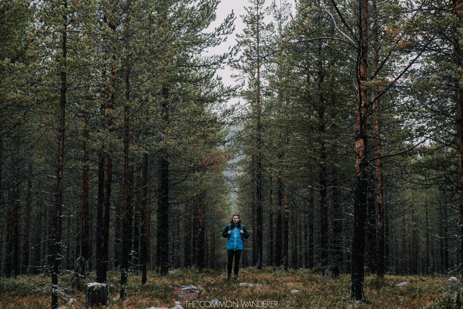 A man hiking through the forests outside of Arjeplog, Swedish Lapland
