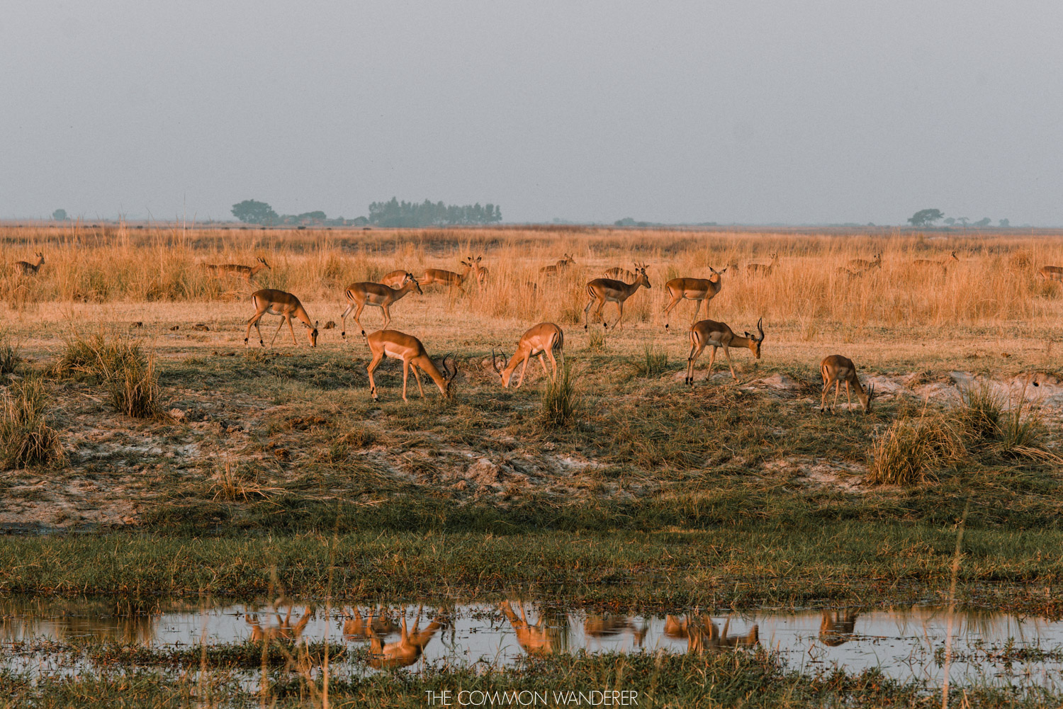 Animals graze in South Luangwa National Park, Zambia - The Common Wanderer