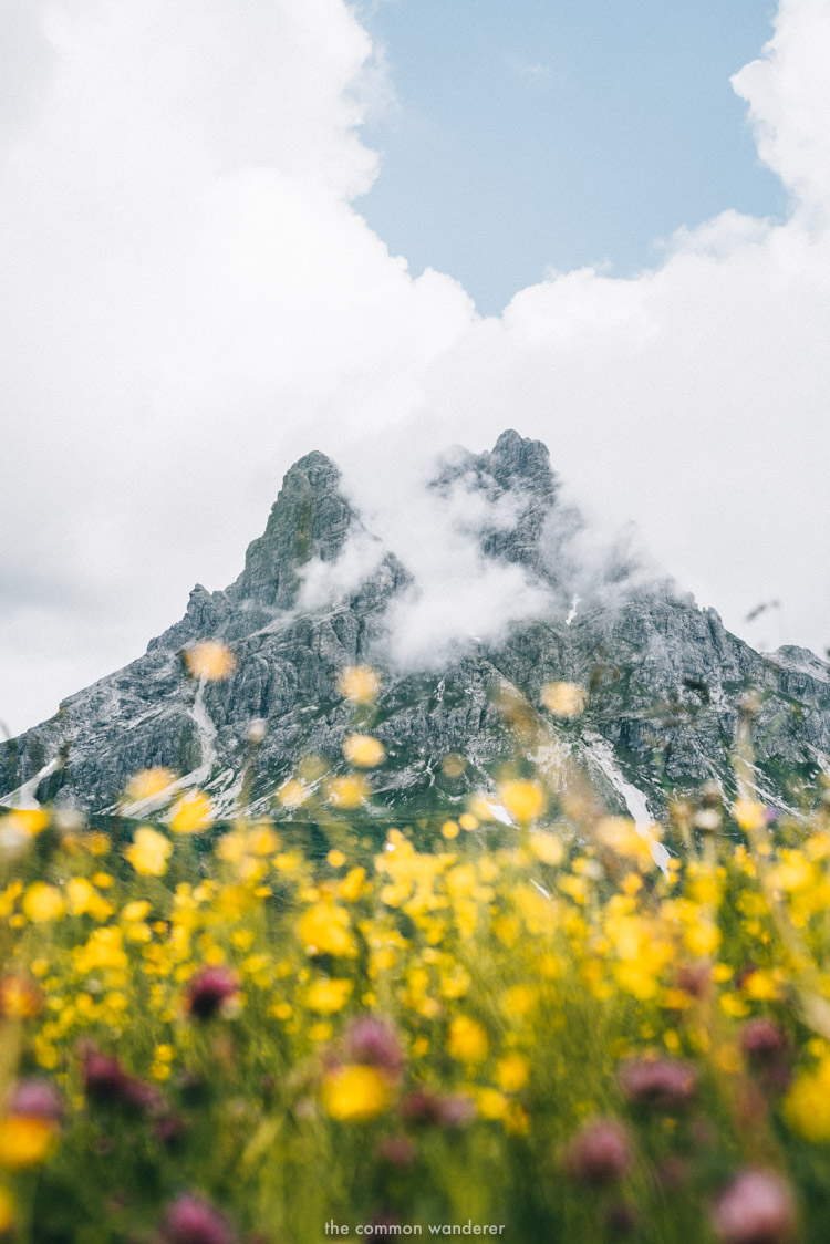 Wildflowers with a mountain in the background, Vorarlberg, Austria