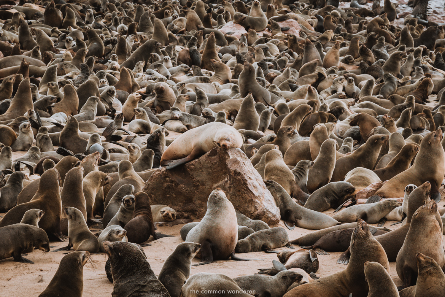 Cape Cross Seal Colony in Namibia